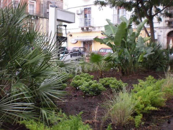 dettaglio-piante-piazza
